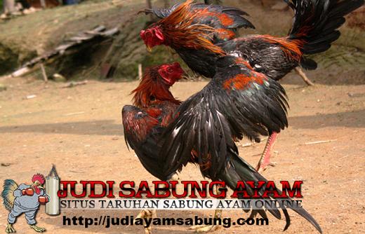 Rahasia Tersembunyi Kaki Ayam Bangkok Pembunuh