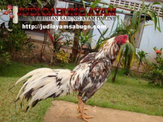 5-Hal-Subjektif-yang-Harus-Diperhatikan-Dalam-Jual-Beli-Ayam-Online