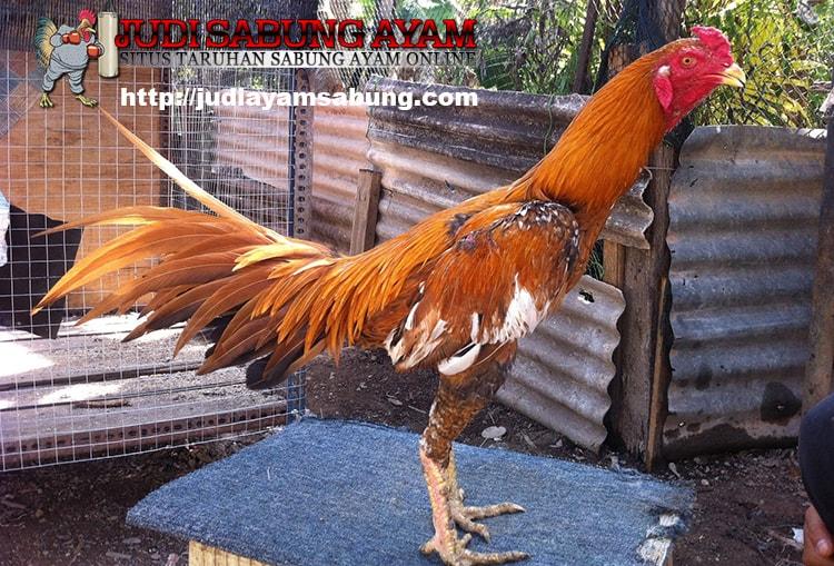 Gambar Ayam Wiring Kuning | Kumn Gambar Bagus on
