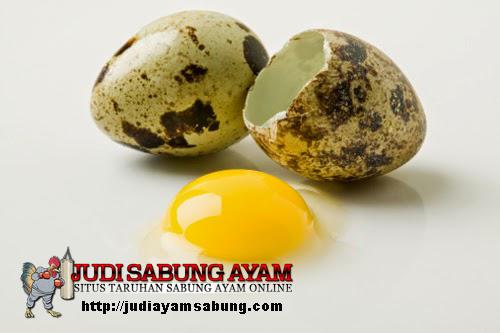 Manfaat-Telur-Puyuh-Untuk-Mendongkrak-Kekuatan-Ayam-Aduan-Anda