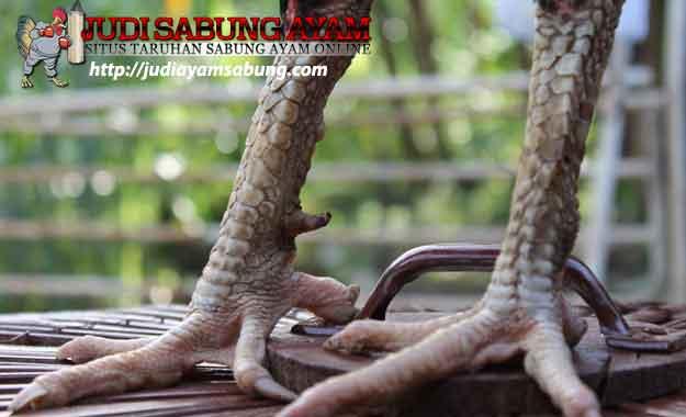 Rahasia Tersembunyi dari Kaki Ayam Bangkok Pembunuh