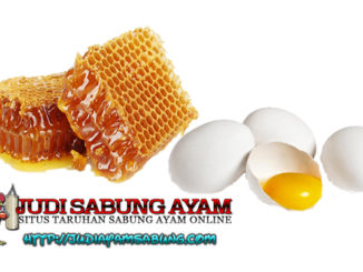 manfaat telur ayam dan madu untuk ayam bangkok