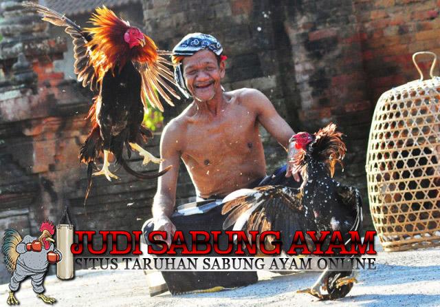 Sejarah-Judi-Sabung-Ayam1