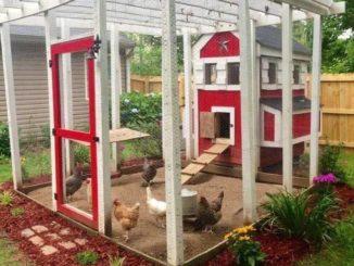 Beberapa Tip Untuk Memelihara Ayam Yang Baik Dan Benar