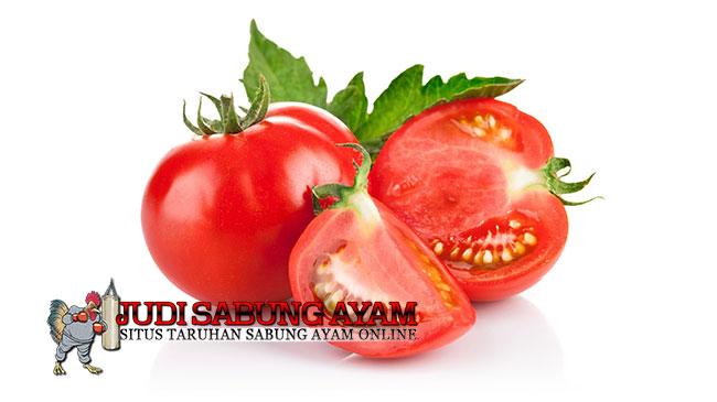 Manfaat Tomat Agar Ayam Aduan Lebih Perkasa