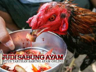 Suplemen Ayam Bangkok Berkualitas dari Bahan Tradisional