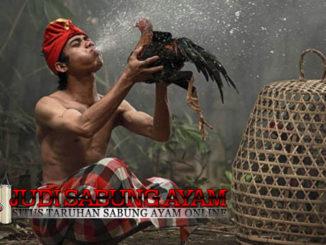 Tips Mencegah Wabah Penyakit Pada Ayam Bangkok