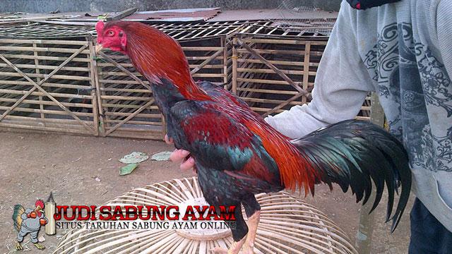 Ayam Bangkok Pakhoy