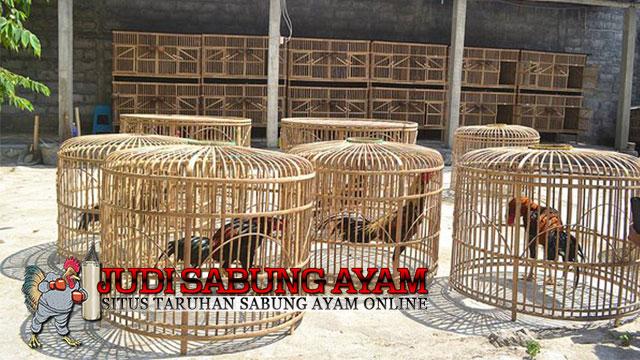 Cara Menjemur Ayam Bangkok