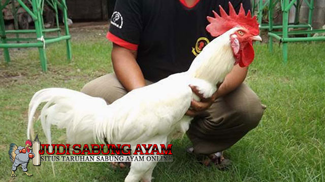 Ayam Kinantan