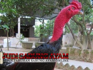 Ayam Saigon