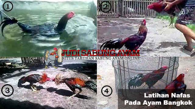 Nafas Ayam Bangkok