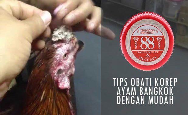 Obat Kurap Ayam Bangkok Aduan Yang Paling Manjur