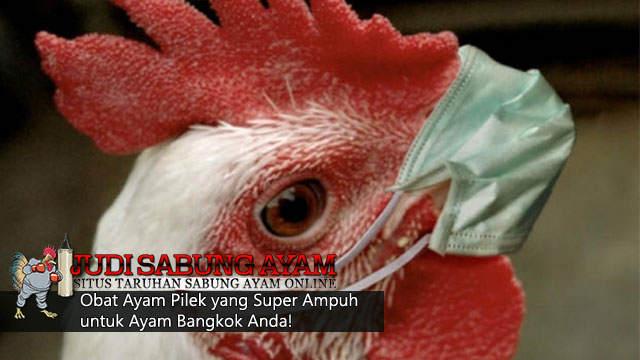 obat pilek bagi ayam bangkok - sabung ayam online