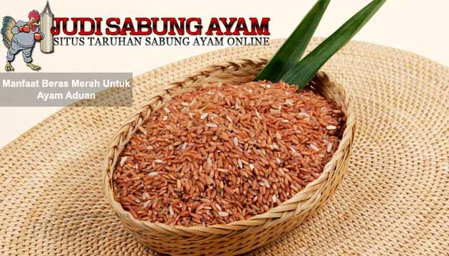 manfaat beras merah untuk ayam aduan - sabung ayam online