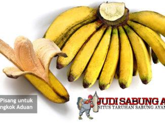 manfaat pisang untuk ayam bangkok aduan - sabung ayam online