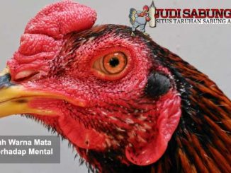 pengaruh warna mata ayam terhadap mental - sabung ayam online