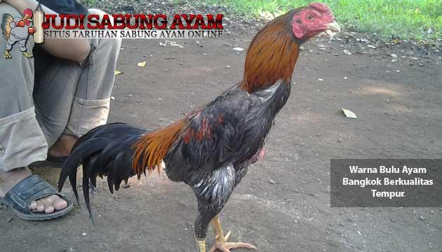 warna bulu ayam bangkok berkualitas tempur - sabung ayam online