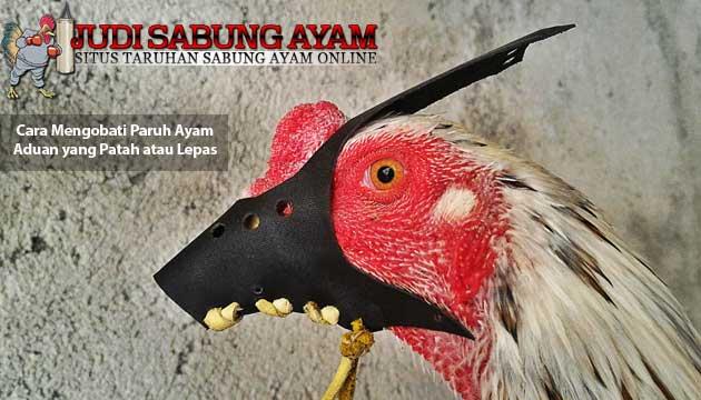 cara mengobati paruh ayam aduan yang patah atau lepas - sabung ayam online