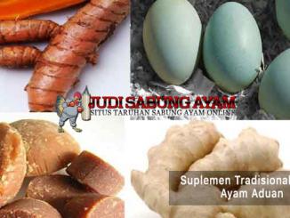 suplemen tradisional untuk ayam - sabung ayam online