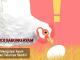 ayam memakan telurnya sendiri - sabung ayam online
