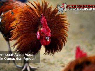 membuat ayam aduan semakin ganas - sabung ayam online