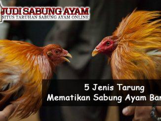 5 Jenis Tarung Mematikan Sabung Ayam Bangkok - Sabung Ayam Online