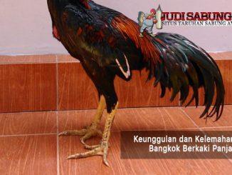 ayam bangkok berkaki panjang - sabung ayam online