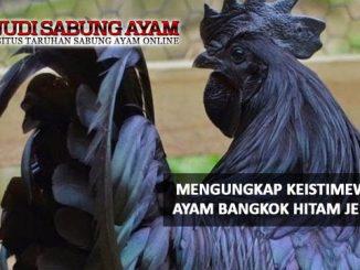 Mengungkap Keistimewaan Ayam Bangkok Hitam Jergem - Judi Sabung Ayam